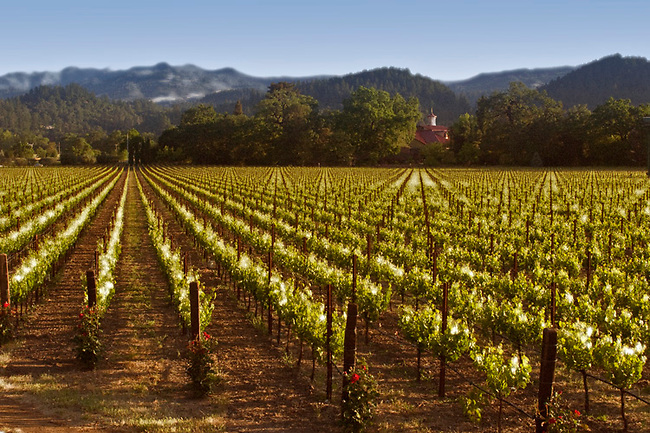 Vineyards and carriage house of Charles Krug winery, St. Helena