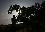 A Palestinian farmer collects grapes during harvest season at a vineyard in Gaza city on July 24, 2018. Photo by Ashraf Amra