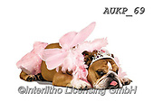 Samantha, ANIMALS, REALISTISCHE TIERE, ANIMALES REALISTICOS, funny photos, photos+++++,AUKP69,#a#, EVERYDAY ,party