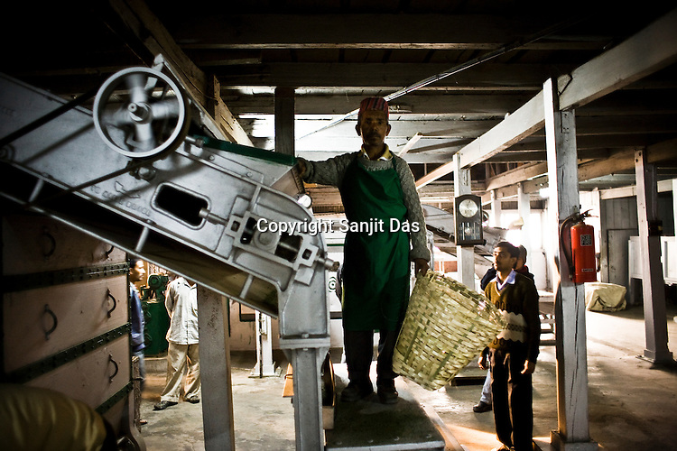 Factory worker, Indrey Sarki poses for a photograp after spreading the tea leaves during the process of tea drying at Makaibari Tea Estate factory, Kurseong in Darjeeling, India.