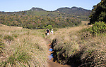 Walkers in Horton Plains national park montane grassland environment, Sri Lanka, Asia