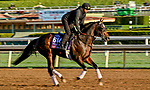 October 30, 2019: Breeders' Cup Turf Sprint entrant Stubbins, trained by Doug F. O'Neill, exercises in preparation for the Breeders' Cup World Championships at Santa Anita Park in Arcadia, California on October 30, 2019. Scott Serio/Eclipse Sportswire/Breeders' Cup/CSM