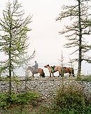 MONGOLIA, Lake Khuvsgul, Mongolian horse rider amid trees and lake, Toilogt Ger Camp