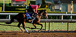 October 28, 2019 : Breeders' Cup Juvenile Turf entrant Graceful Kitten, trained by Amador Merei Sanchez, exercises in preparation for the Breeders' Cup World Championships at Santa Anita Park in Arcadia, California on October 28, 2019. Scott Serio/Eclipse Sportswire/Breeders' Cup/CSM