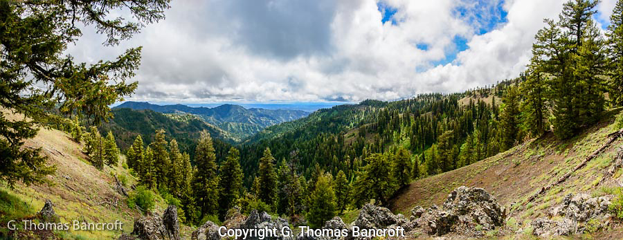 The subalpine forest extended down through the wilderness valley for as far as the eye could see.  I found the wildness breath taking.  This looks across the Wenaha-Tucannon Wilderness into Oregon.  We had been having rain miixed with snow during tbe last two days so it was really relaxing to finally have the rain stop.