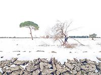 Neve apparente 2017