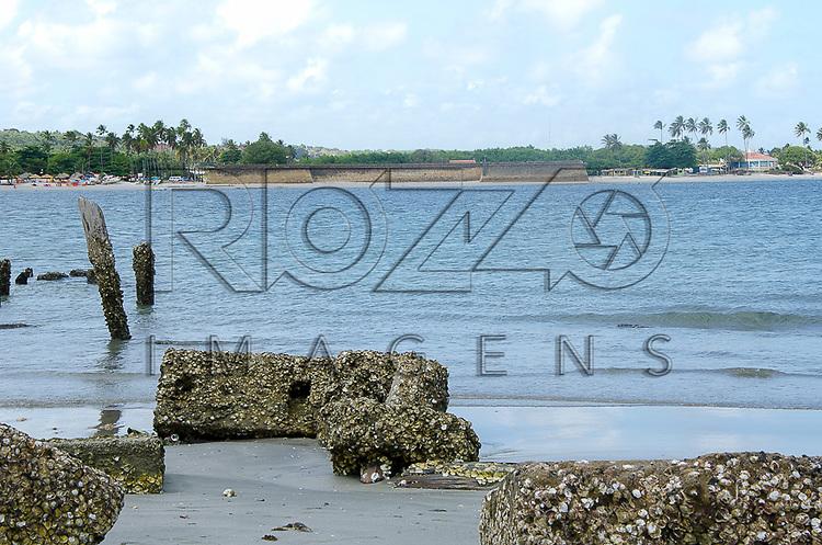 Cracas marinhas na Ilha de Itamaracá - PE, 12/2012.