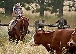 Cowboy Photography Workshop   Erickson Cattle Co. ..Wyatt Hansen .. Photo by Al Golub/Golub Photography