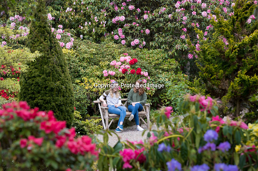 29/04/19<br /> <br /> Meaghan Singleton, 20, and Rebecca Emery 26, enjoy the rhododendron and azalea blooms at Lea Gardens near Matlock, Derbyshire. The gardens are busting into flower after this weekend's rain brought an end to a dry spell.<br /> <br /> All Rights Reserved, F Stop Press Ltd +44 (0)7765 242650  www.fstoppress.com rod@fstoppress.com