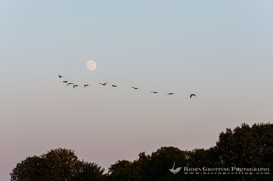 Egypt. Aswan stands on the east bank of the Nile. Birds against the Moon.