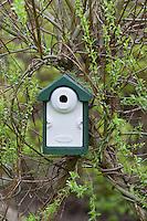 Nistkasten, Vogel-Nistkasten, Meisenkasten zwischen Weidenzweigen, Kopfweide