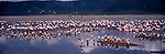 Lesser flamingos and cattle egrets wade in a lake in Ngorongoro Crater in Tanzania.