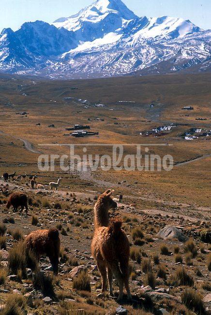 El Huayna Potosi y su valle lleno de camelidos en los andes al norte  de La Paz+ montana, ande *Huayna Potosi  moutain near and sourrounding valley full of llamas in the Andes north from La Paz