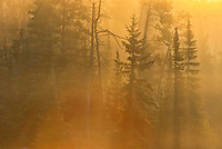 Trees in morning fog<br />