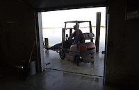 Tuna is lifted with fork lift for moving
