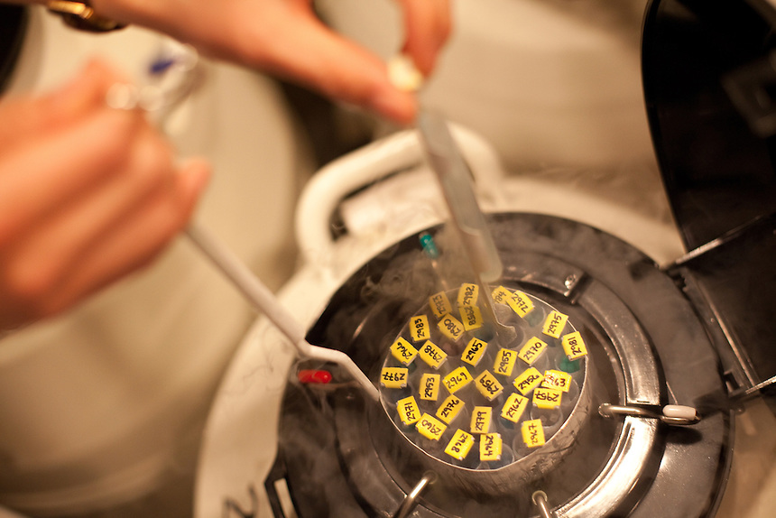 An embrologist places a canister of embryos into a cryo tank at Shady Grove Fertility Center in Rockville, Maryland, . May 3, 2013.