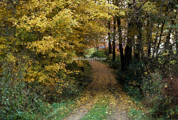 Fall Color and Unpaved Road, Yellow
