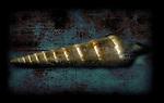 A golden shell