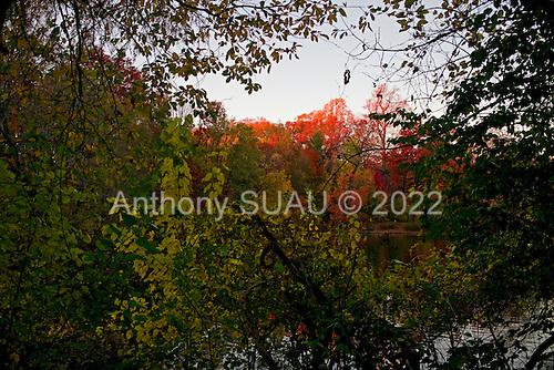 Brooklyn, New York<br /> Park Slope<br /> November 15, 2014<br /> <br /> Fall foliage over Park Slope.