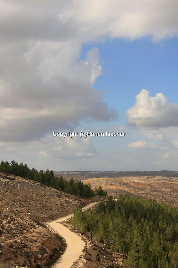 Israel, Southern Hebron Mountain, Yatir Forest Scenic Road near Tel Yatir