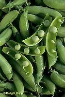 HS26-119d  Pea - edible sugar pea pods - Sugar Ann variety