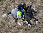 LOUISVILLE, KENTUCKY - MAY 02: Tacitus, trained by William Mott, exercises in preparation for the Kentucky Derby at Churchill Downs in Louisville, Kentucky on May 2, 2019. Scott Serio/Eclipse Sportswire/CSM