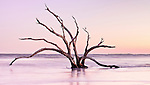 Live Oaks in the South Carolina surf. Erosion has left these once majestic live oaks in the surf, to be battered by the waves and wind. Looking like skeletons, these remains made for an interesting sunrise photo.