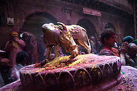 A statue of holy cow at Banke Bihari Temple in Vrindavan, 8th March 2012, Uttar Pradesh, India.
