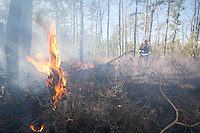 Forest Wildfire, Wharton State Forest, Pine Barrens, New Jersey