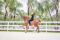 South Florida horse photos by Debi Pittman Wilkey.