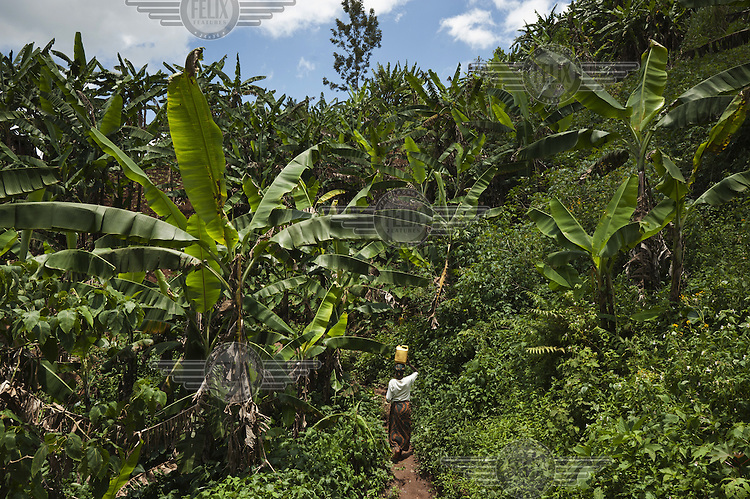 A woman walks through a verdant hillside farm carrying a water container on her head.