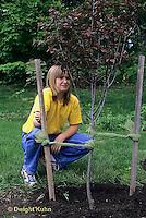 TT19-056z  Planting flowering plum tree - Prunus spp. - (TT19-004e,047z,048z,050z,051z,053z,056z,059z)