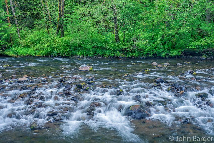 ORCAN_D188 - USA, Oregon, Mount Hood National Forest, Salmon-Huckleberry Wilderness, Spring flora and section of rapids on the Salmon River - a federally designated Wild and Scenic River.