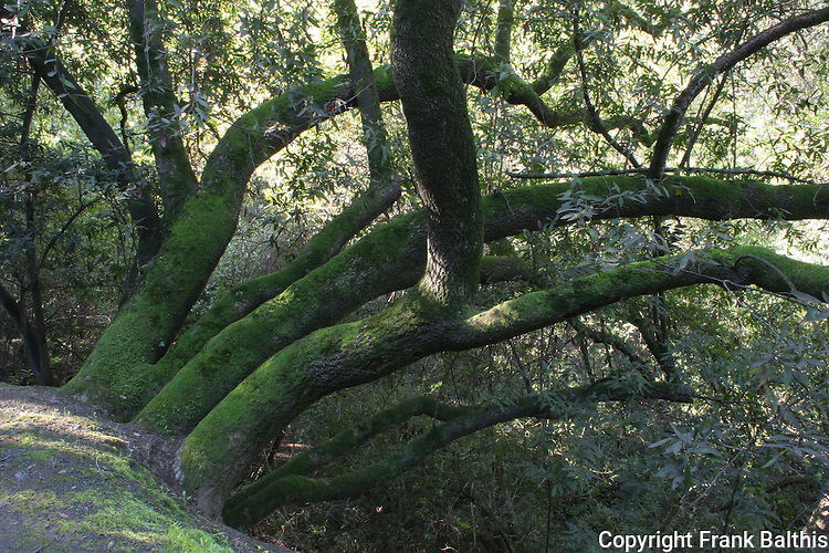 woodland in greenbelt in Hayward