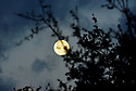 MIRAMAR, FL - MARCH 10: A Full Moon is pictured in a early morning over Broward County, City of Miramar, Florida, USA on March 10, 2020 in Broward County,  Miramar, Florida.  ( Photo by Johnny Louis / jlnphotography.com )