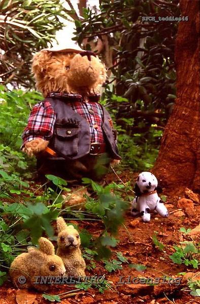 Xavier, CUTE ANIMALS, teddies, photos, SPCHTEDDIES46,#ac#