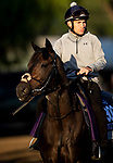 OCT 29: Breeders' Cup Juvenile Turf Sprint entrant A'Ali, trained by Simon Crisford, at Santa Anita Park in Arcadia, California on Oct 29, 2019. Evers/Eclipse Sportswire/Breeders' Cup