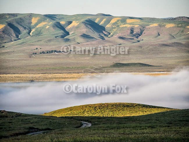 A morning fog bank over Carrizo Plain National Monument