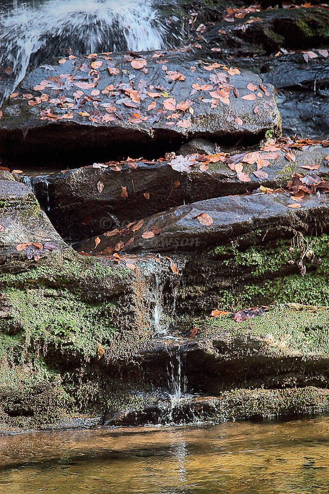 Waterfall with Moss and Leaves on Rocks