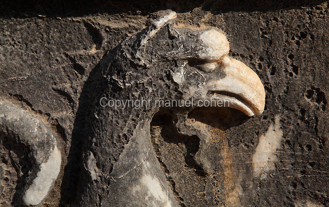 Carved relief depicting the head of a griffin on a capital from the fringed pilasters of the Temple of Apollo, 4th century BC, Didyma, Aydin, Turkey. A griffin is a mythological creature which is half lion, half eagle and these were the guardians of the sanctuary. Didyma was an ancient Greek sanctuary on the coast of Ionia near Miletus, consisting of a temple complex and the oracle of Apollo, or Didymaion, who was visited by pilgrims from across the Greek world. The earliest temple ruins found here date to the 8th century BC but Didyma's heyday lasted throughout the Hellenistic age. It was approached along a 17km Sacred Way from Miletus and is the largest sanctuary in Western Turkey. Picture by Manuel Cohen