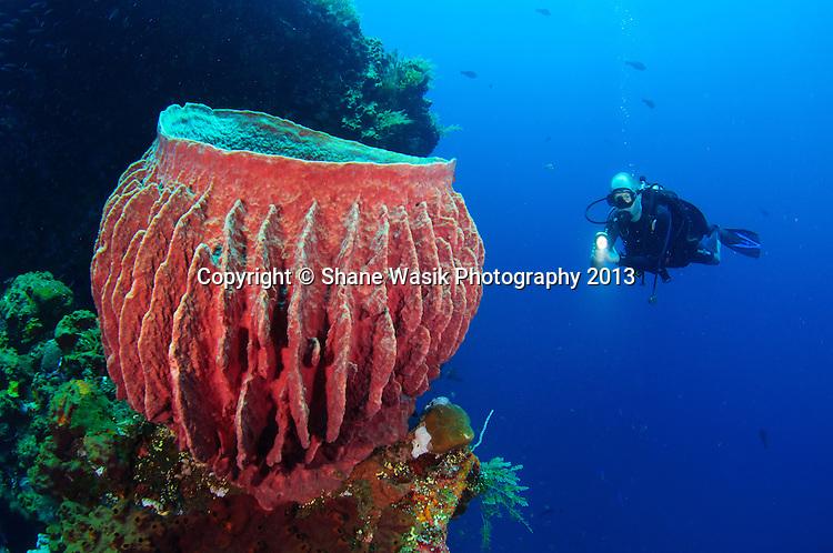 Erik checks out one the large barrel sponges