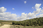 Israel, Shephelah, a view of Maresha forest