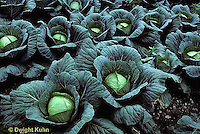 Cabbage Family