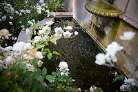 Flowers around a small fountain outside Weingart Hall, photographed June 8, 2018.<br /> (Photo by Marc Campos, Occidental College Photographer)
