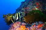 Lens Reef