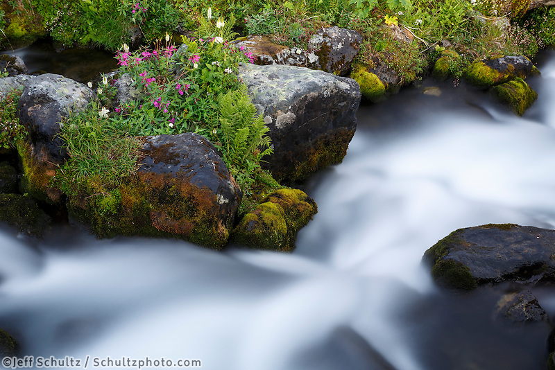 Summer landscape showing Hidden Lake Creek flowing over moss covered rocks with wildflowers.  Chugach Mountains in Chugach State Park   Summer, Alaska<br /> <br /> Copyright Jeff Schultz / SchultzPhoto.com