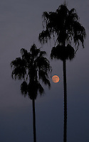 Massive brush fires around San Diego make for a reddish moon over Coronado, California.