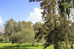 Israel, Sharon, Ilanot forest the National Forestry Arboretum