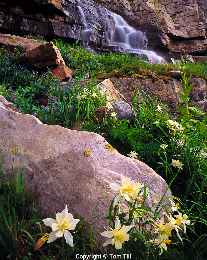 Columbine & Falls, High Uintas Wilderness, Utah   Naturalist's Basin   Wasatch/Cache National Forest