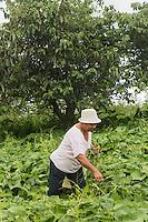 France, île de la Réunion, Chaloupe Saint-Leu,  Maximilia Vitry cueille des brèdes de chouchou pour le repas à la ferme  //  France, Reunion island (French overseas department),Chaloupe Saint Leu, Maximilia Vitry picks chayotte brèdes, green eatable leaves,  for dinner at the farm<br /> <br /> Auto N°: 2014-110